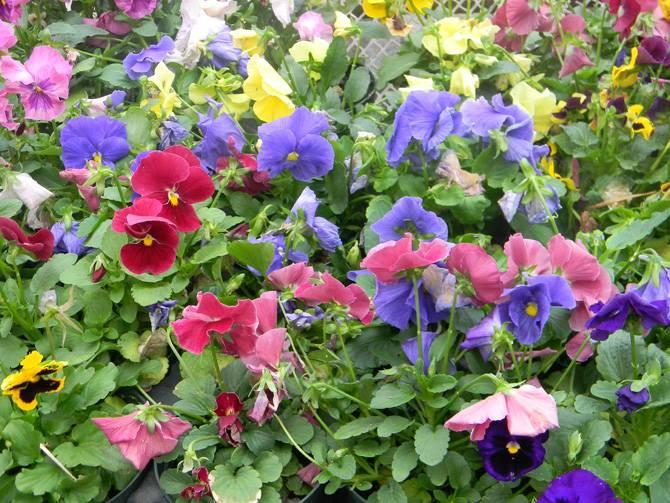 Vegetable & Flowering Plants
