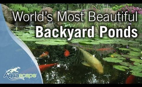 World's Most Beautiful Backyard Ponds